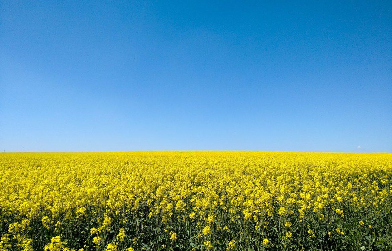 biocarburantes.jpg