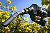 El 74% de los españoles apoya el fomento de los biocarburantes basados en cultivos, según una encuesta europea