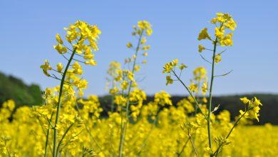 APPA propone extender los criterios de sostenibilidad de los biocarburantes a todas las materias primas
