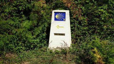 Galicia fomenta el desarrollo de la biomasa