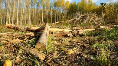 Biomasa: potencia renovable firme para compensar el cierre de centrales nucleares