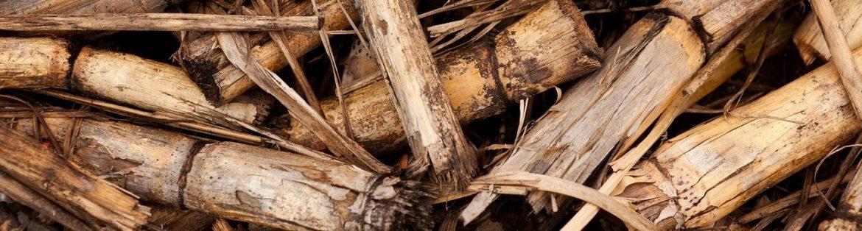 banner-biomasaa.jpg