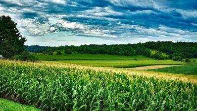 APPA Biocarburantes reivindica el papel clave de los biocarburantes en el Plan Nacional Integrado de Energía y Clima 2021-2030
