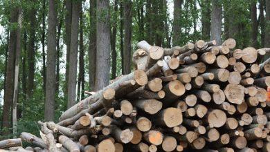 Jornada técnica sobre Biomasa: La biomasa ante la década 2020-2030