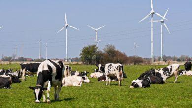 El 74% de la electricidad renovable en 2030 sólo se alcanzará combinando todo tipo de instalaciones